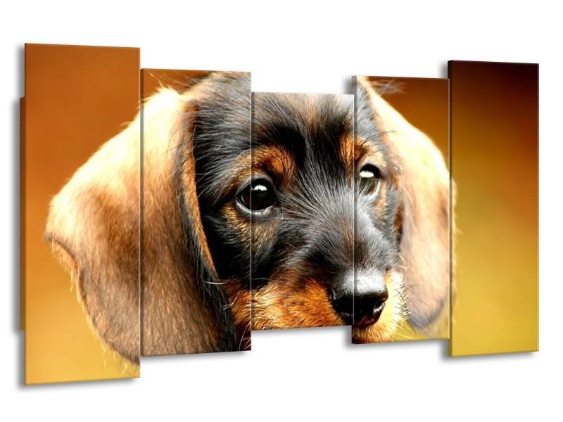 Canvas schilderij Hond   Bruin, Geel, Zwart   150x80cm 5Luik