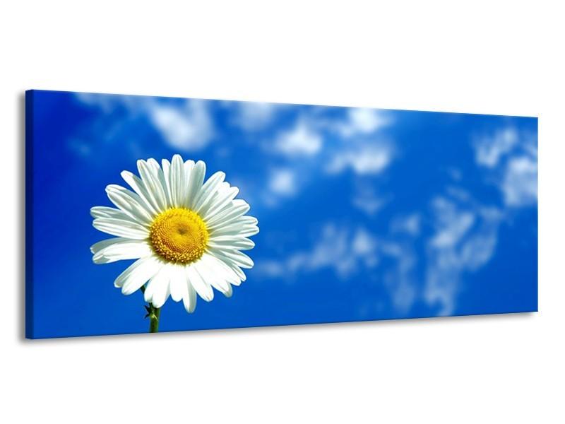 Canvas schilderij Bloem | Blauw, Wit, Geel | 145x58cm 1Luik