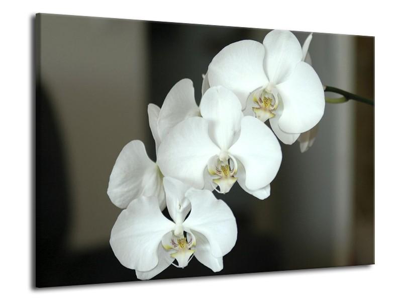 Glas schilderij Orchidee   Wit, Zwart, Grijs   70x50cm 1Luik