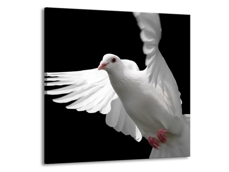 Glas schilderij Vogel | Wit, Zwart, Grijs | 50x50cm 1Luik