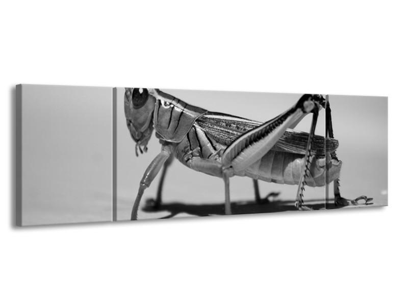 Glas schilderij Sprinkhaan | Grijs, Zilver, Wit | 170x50cm 3Luik