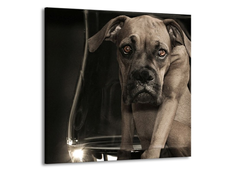 Glas schilderij Hond | Grijs, Zwart, Wit | 70x70cm 1Luik
