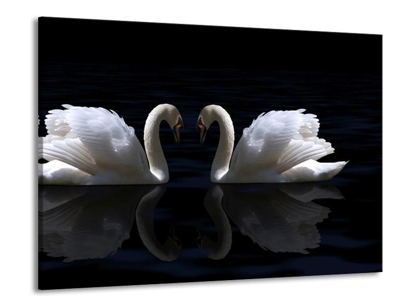 Glas schilderij Zwanen | Wit, Zwart | 100x70cm 1Luik