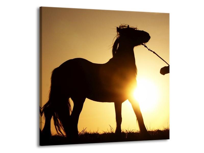 Glas schilderij Paard | Zwart, Geel | 50x50cm 1Luik
