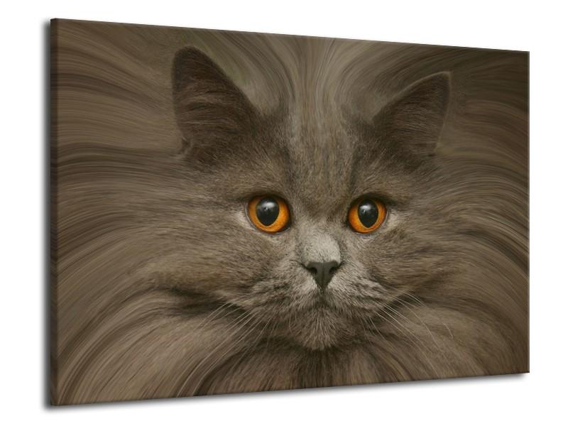 Canvas schilderij Kat | Grijs, Bruin, Wit | 70x50cm 1Luik