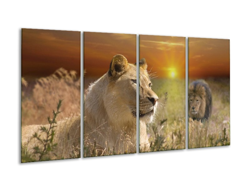 Glas schilderij Leeuw | Geel, Oranje, Crème | 160x80cm 4Luik