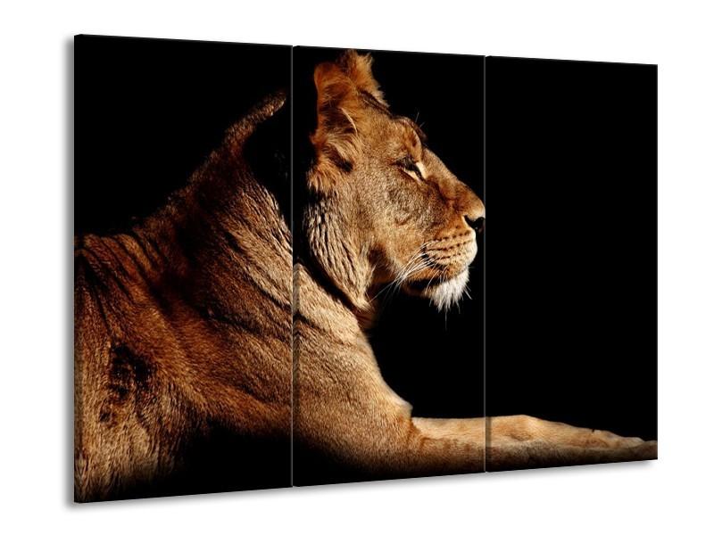 Glas schilderij Leeuw | Bruin, Zwart | 90x60cm 3Luik