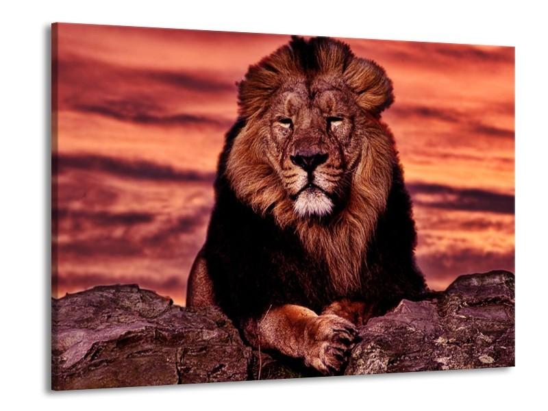 Glas schilderij Leeuw | Paars, Bruin, Zwart | 100x70cm 1Luik
