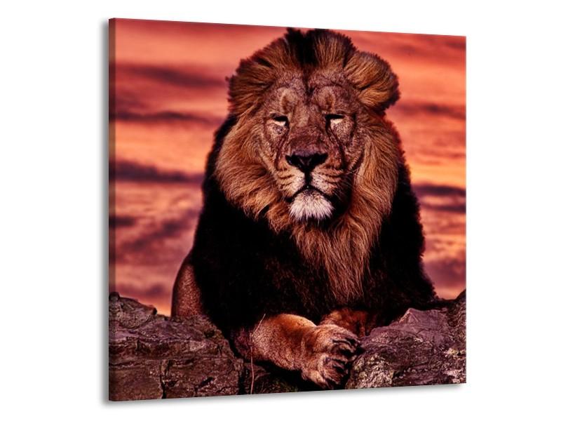 Glas schilderij Leeuw | Paars, Bruin, Zwart | 70x70cm 1Luik