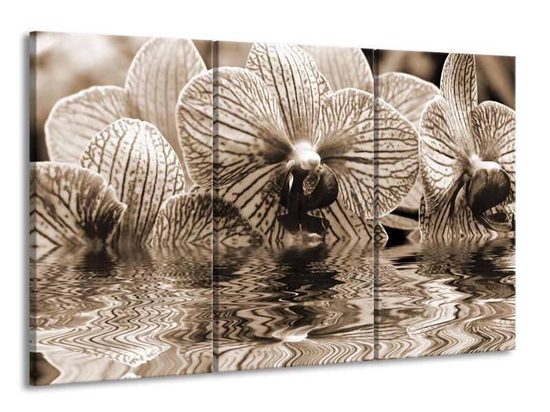 Glas schilderij Orchidee | Sepia, Bruin | 165x100cm 3Luik