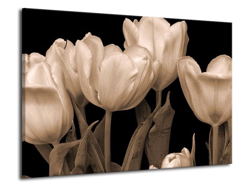Glas schilderij Tulpen   Sepia, Bruin   70x50cm 1Luik