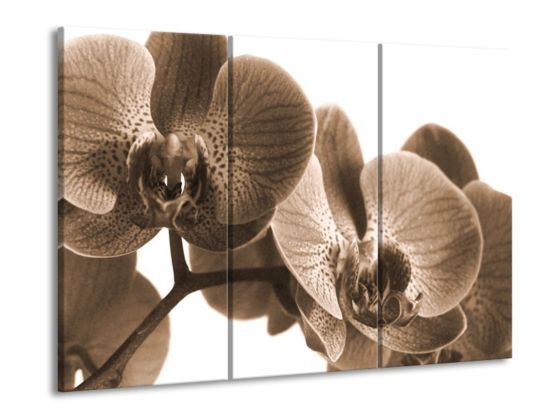 Canvas schilderij Orchidee   Sepia   90x60cm 3Luik