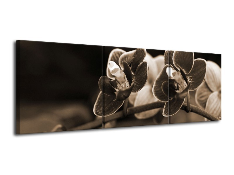 Glas schilderij Orchidee | Sepia, Bruin | 120x40cm 3Luik