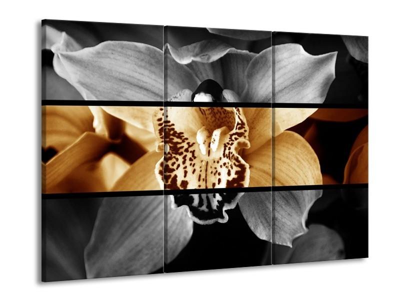 Canvas schilderij Orchidee   Sepia, Bruin   90x60cm 3Luik