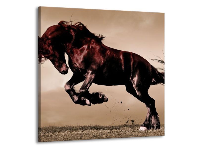 Canvas schilderij Paard   Bruin, Grijs, Zwart   70x70cm 1Luik