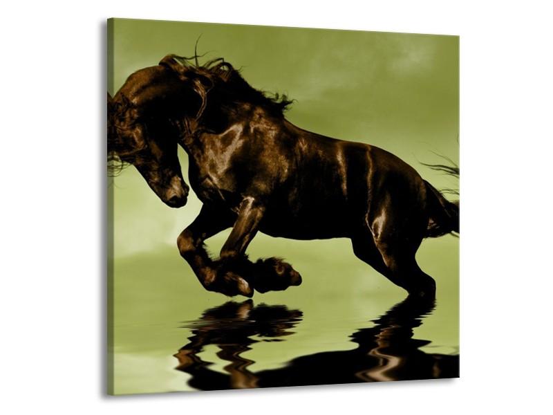 Canvas schilderij Paard   Groen, Bruin, Zwart   50x50cm 1Luik
