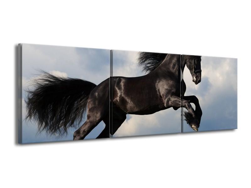 Canvas schilderij Paard | Zwart, Blauw, Wit | 150x50cm 3Luik