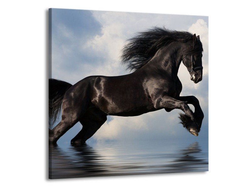 Glas schilderij Paard   Zwart, Blauw, Wit   70x70cm 1Luik