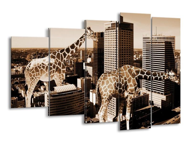 Canvas schilderij Giraffe | Bruin, Wit | 150x100cm 5Luik