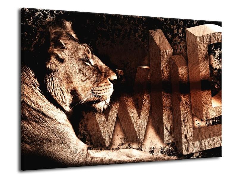 Glas schilderij Leeuw | Bruin, Zwart | 70x50cm 1Luik