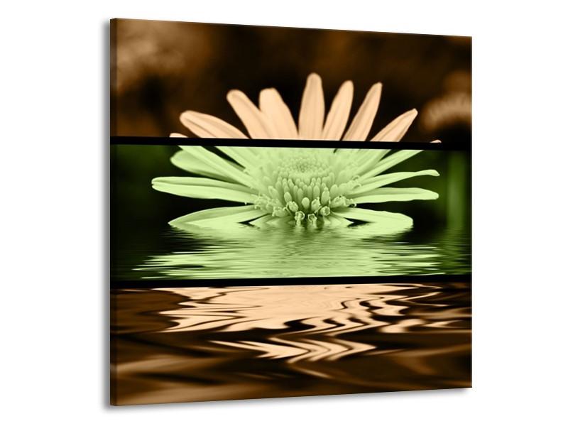 Glas schilderij Bloem | Groen, Bruin, Zwart | 70x70cm 1Luik