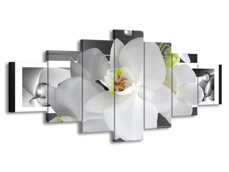 Glas schilderij Orchidee | Grijs, Wit | 210x100cm 7Luik