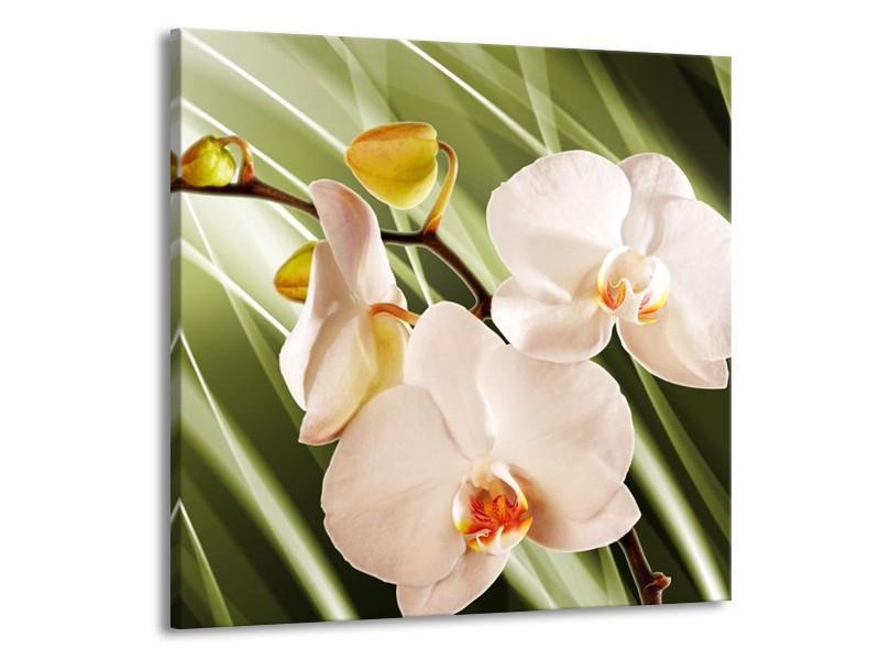 Glas schilderij Orchidee | Groen, Roze, Wit | 70x70cm 1Luik