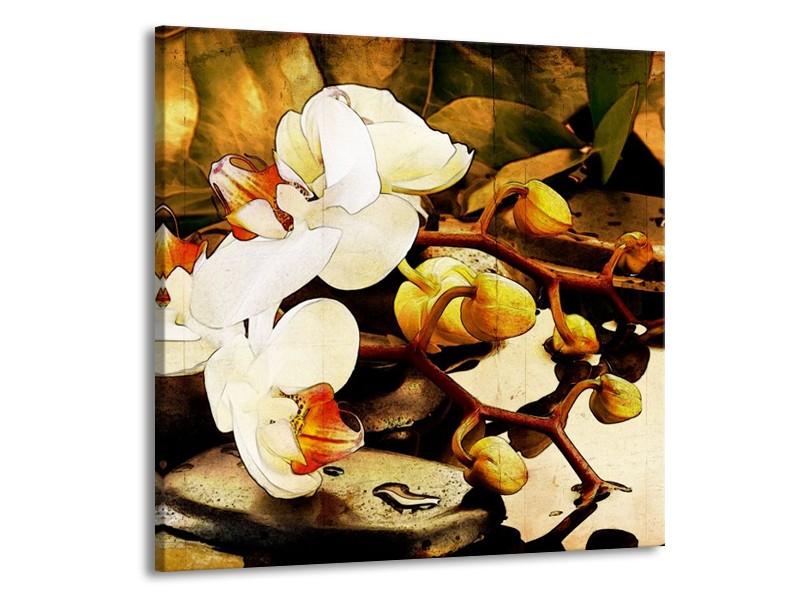 Canvas schilderij Orchidee   Bruin, Wit, Groen   70x70cm 1Luik
