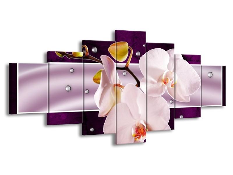 Glas schilderij Orchidee | Paars, Wit, Grijs | 210x100cm 7Luik