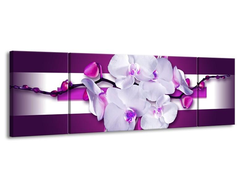 Canvas schilderij Orchidee | Paars, Wit | 170x50cm 3Luik
