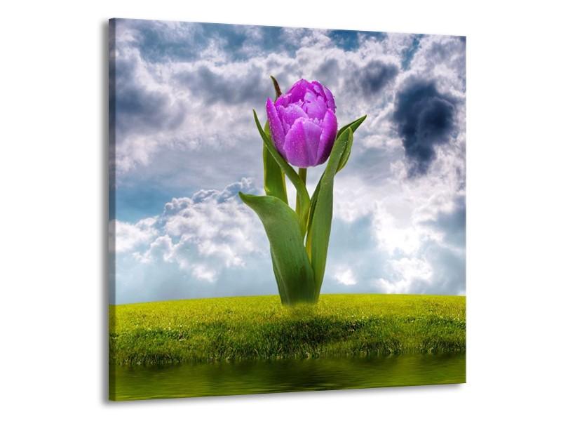 Canvas schilderij Tulp | Paars, Grijs, Groen | 70x70cm 1Luik