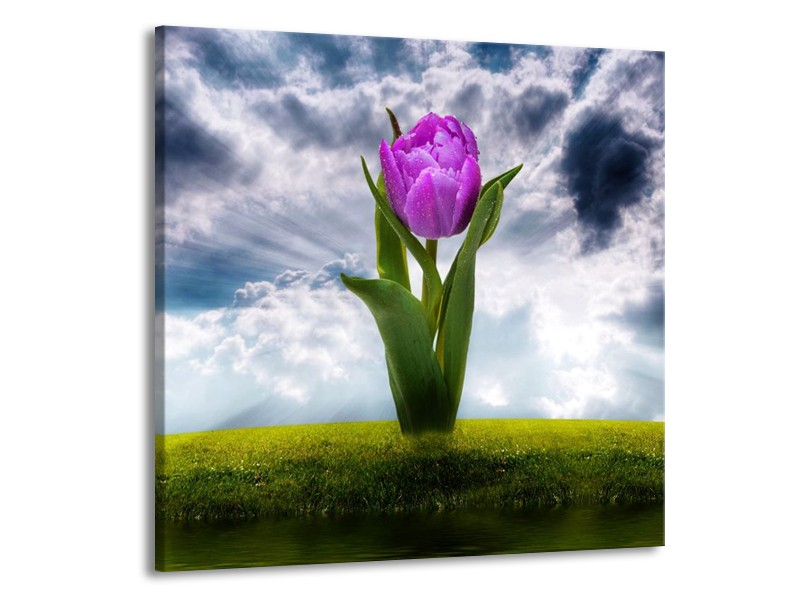 Canvas schilderij Tulp   Grijs, Paars   70x70cm 1Luik