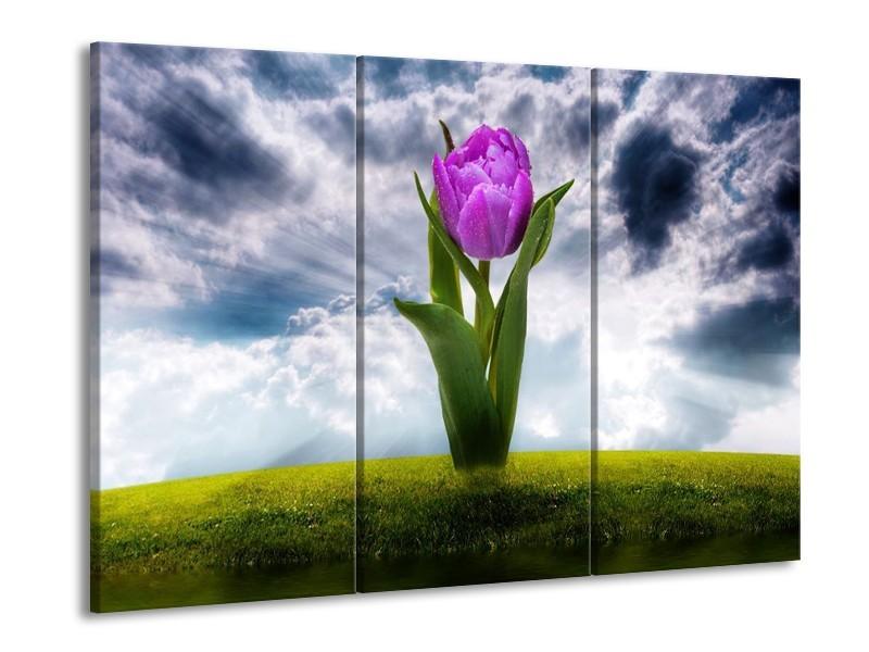 Canvas schilderij Tulp | Grijs, Paars | 90x60cm 3Luik