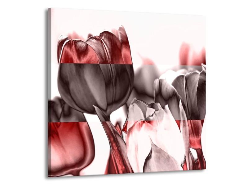 Glas schilderij Tulp | Rood, Wit, Bruin | 70x70cm 1Luik