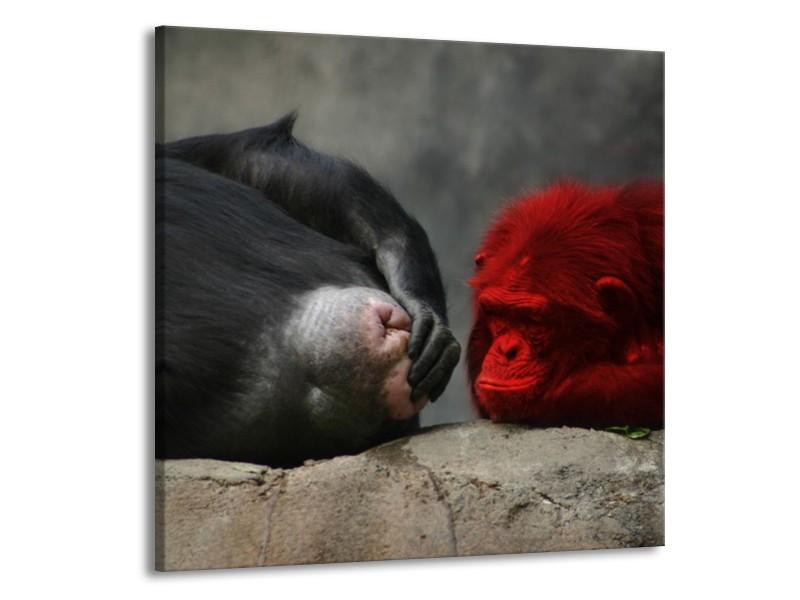 Canvas schilderij Aap | Grijs, Rood, Wit | 50x50cm 1Luik