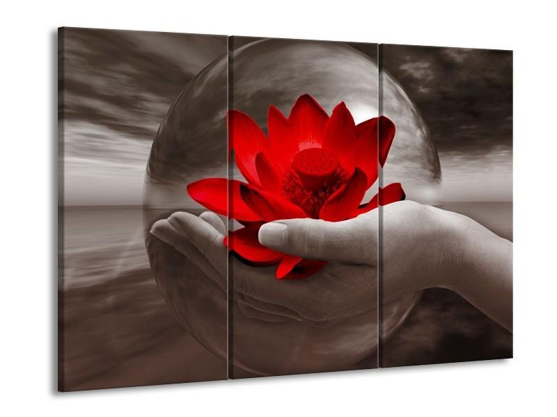 Glas schilderij Bloem | Rood, Sepia, Grijs | 90x60cm 3Luik