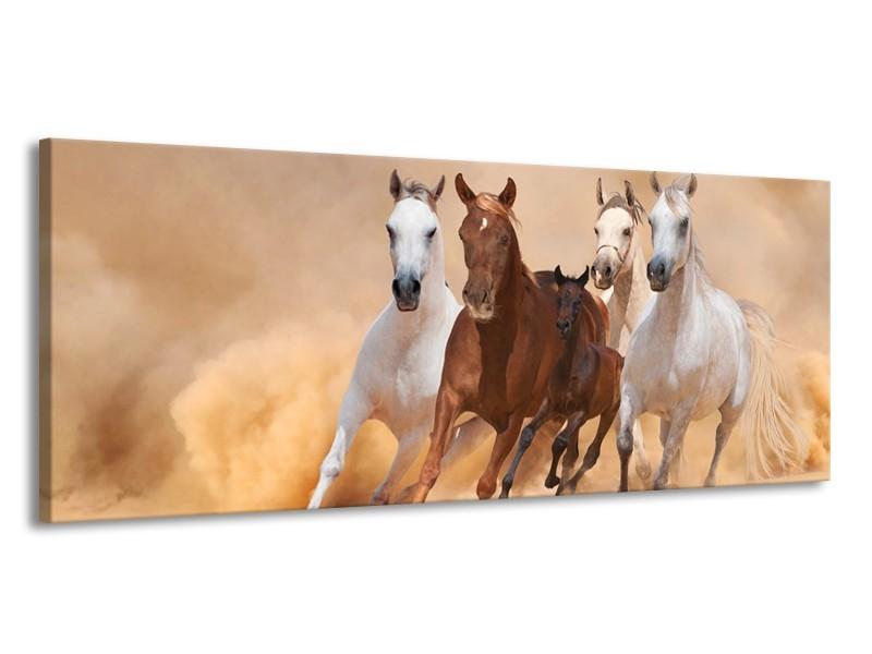 Canvas schilderij Paard   Bruin, Wit, Crème   145x58cm 1Luik