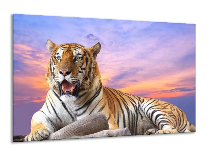 Canvas schilderij Tijger   Bruin, Wit, Blauw   120x70cm 1Luik