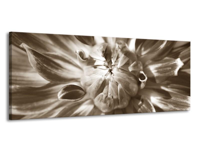 Glasschilderij Bloem   Sepia   145x58cm 1Luik