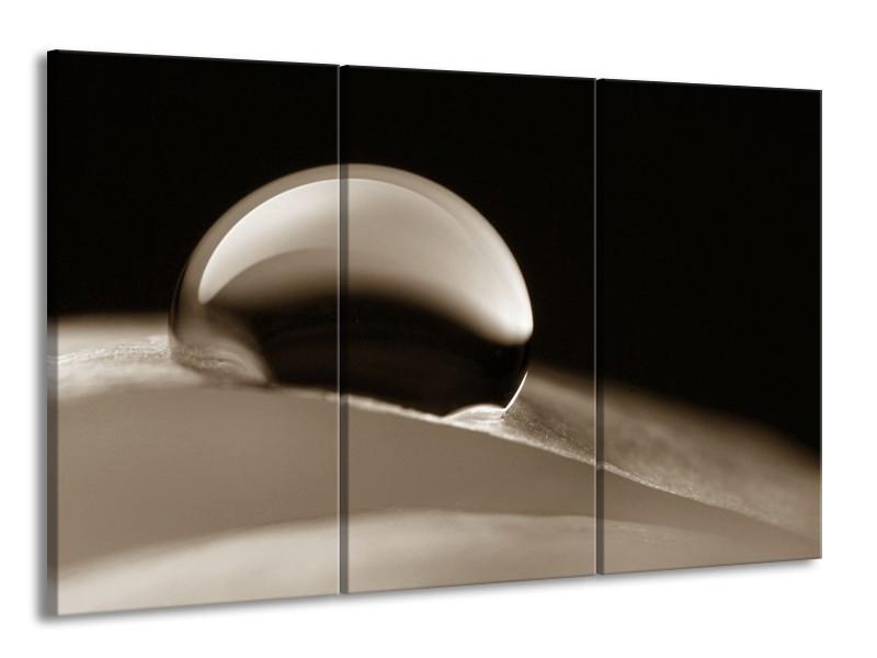 Canvas Schilderij Macro | Sepia | 165x100cm 3Luik