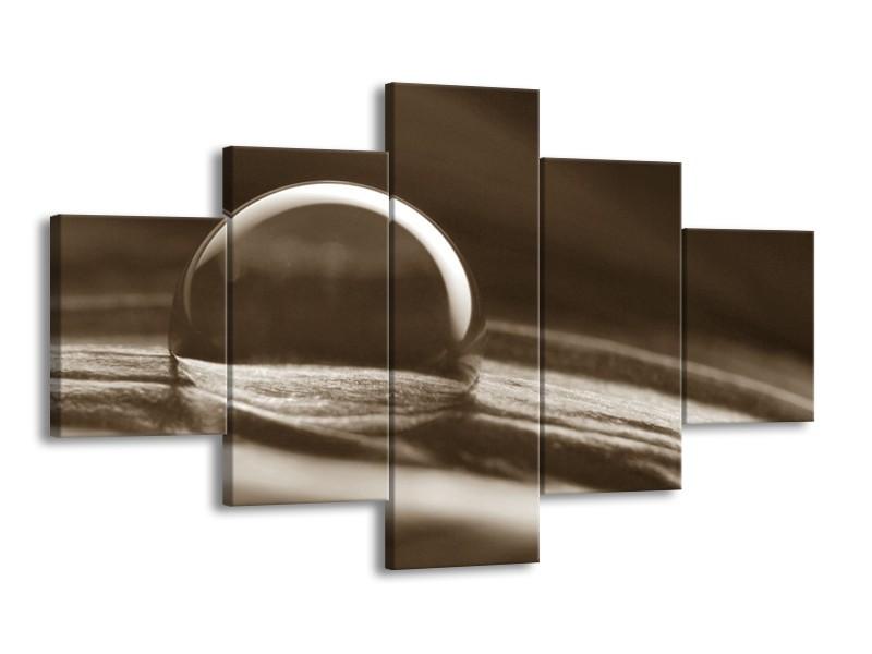 Canvas Schilderij Macro | Sepia | 125x70cm 5Luik