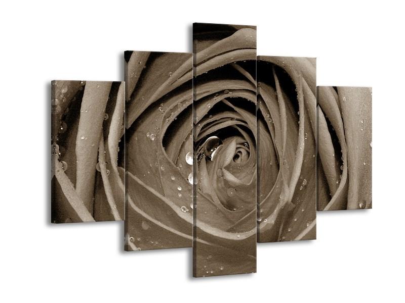 Glasschilderij Bloem, Roos | Sepia | 150x105cm 5Luik