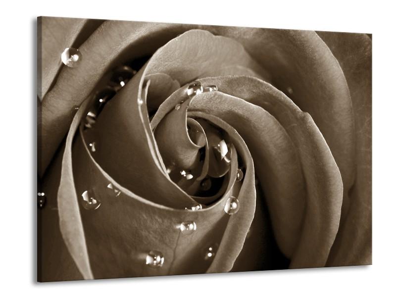 Canvas Schilderij Roos, Bloem   Sepia   100x70cm 1Luik