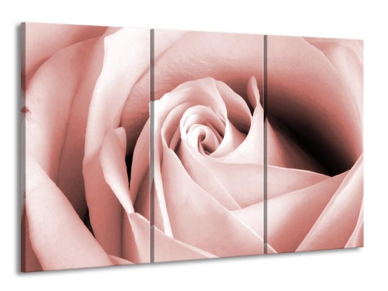 Glasschilderij Roos, Bloem   Bruin, Rood   165x100cm 3Luik
