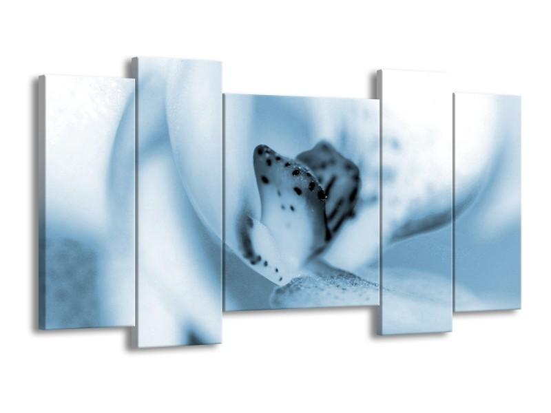 Glasschilderij Bloem | Blauw, Wit | 120x65cm 5Luik