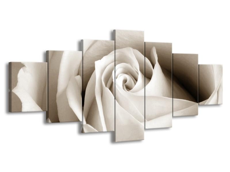 Glasschilderij Roos, Bloem | Crème , Sepia | 210x100cm 7Luik