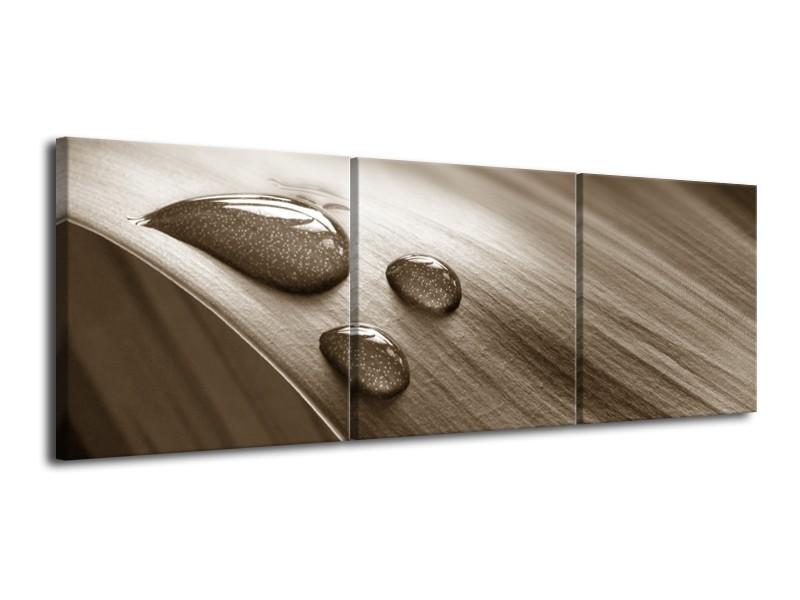Canvas Schilderij Macro, Druppel | Sepia | 120x40cm 3Luik