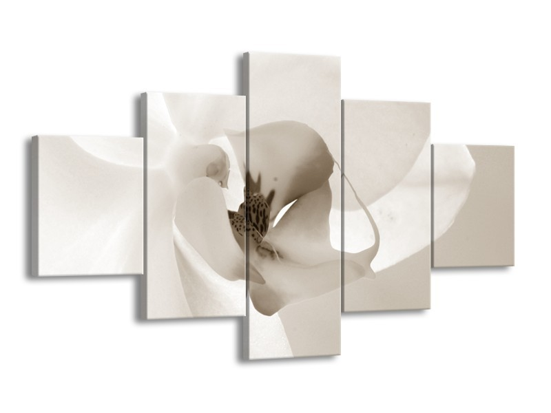 Glasschilderij Bloem | Sepia | 125x70cm 5Luik