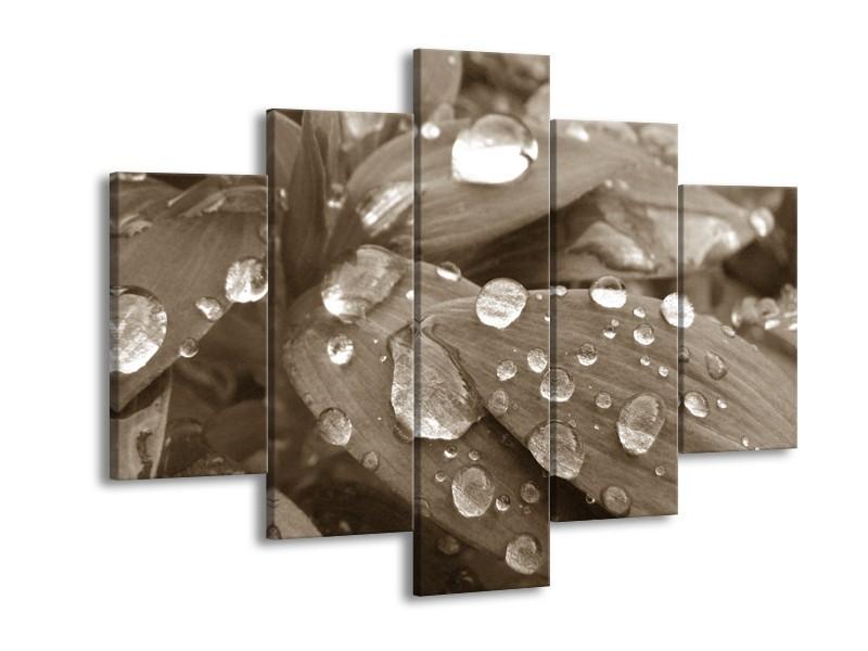 Glasschilderij Bloem, Druppel | Sepia | 150x105cm 5Luik