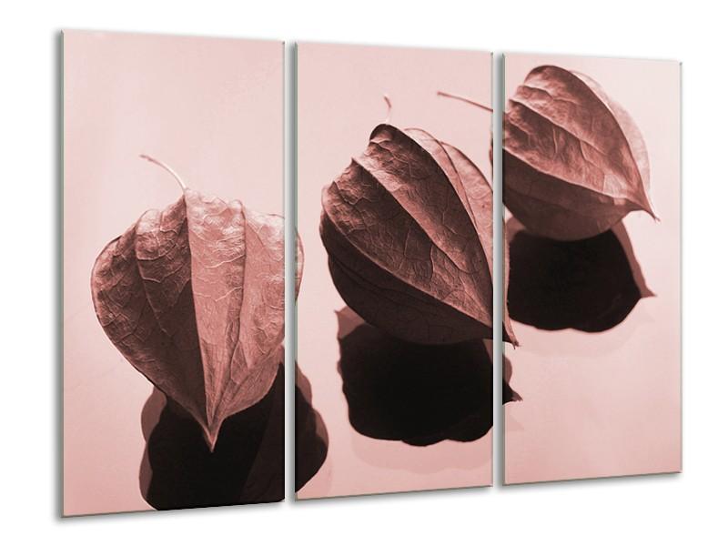 Glasschilderij Bloem   Rood, Bruin   120x80cm 3Luik